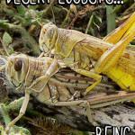 Desert Locusts Make Me Cringe